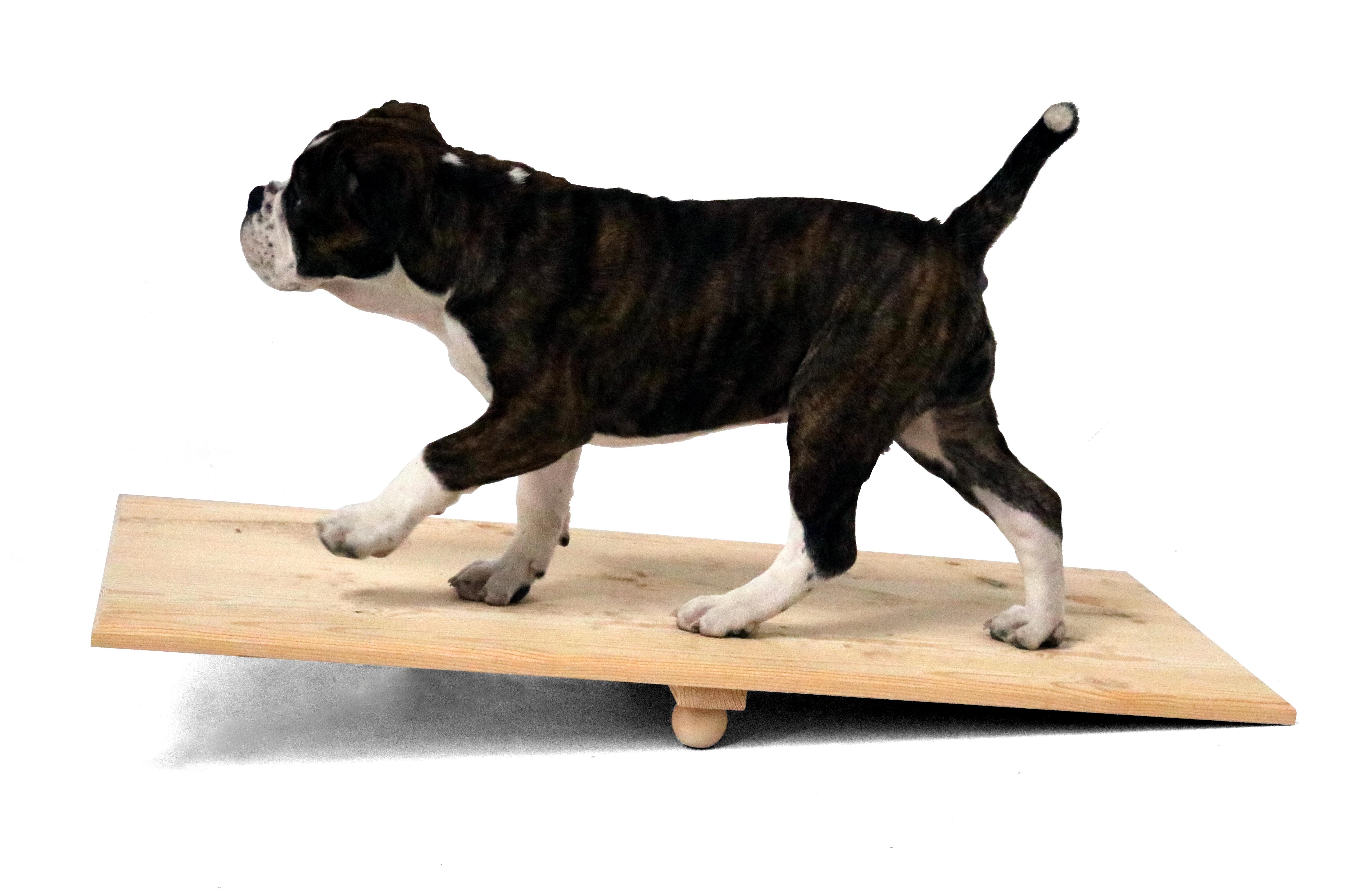 Welpen-Wippe, Activity Holz-Wippbrett für Hunde, naturbelassen