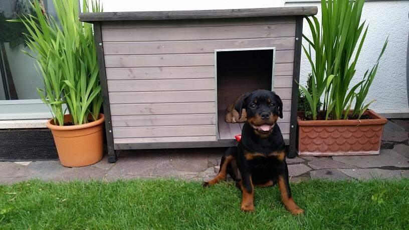 Moderne Holz-Hundehütte mit Flachdach. grau lasiert, 106 x 69 x 82 cm