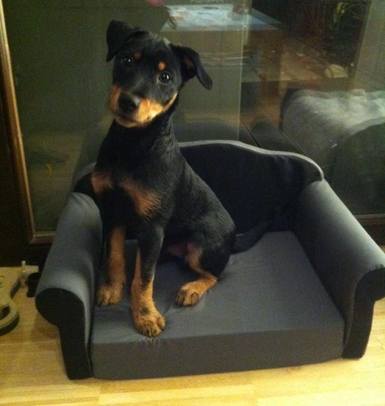 Hundesofa / Katzensofa, ausklappbar mit Textilbezug grau