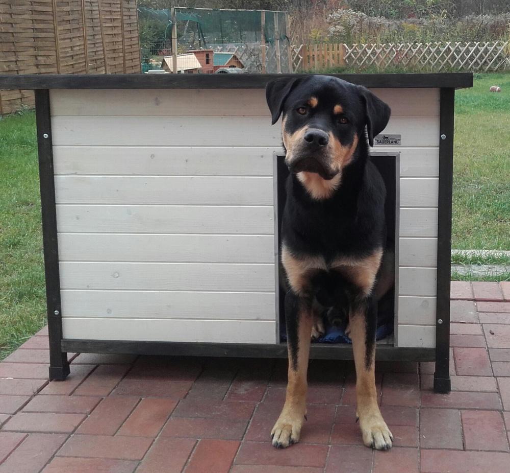 Isolierte Holz-Hundehütte mit Flachdach, weiß lasiert, 106 x 69 x 82 cm